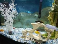 40 Gallon Fish Tank + Tank Stand, Filter, Heater, UV Cleaner, Decorations + Fish