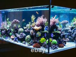Fish tank Filter LED Plants Decoration All in One